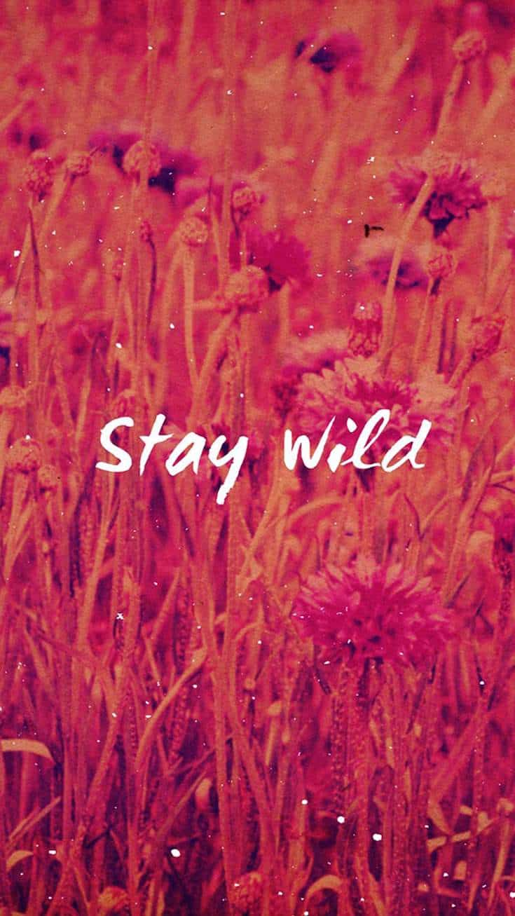 Stay Wild | Covetboard Quotes