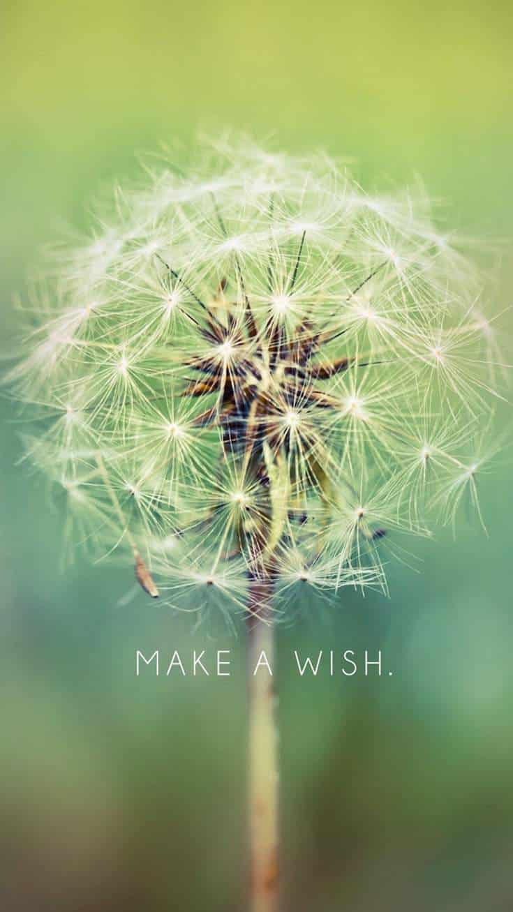 Make A Wish | Covetboard Quotes